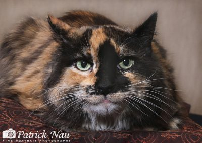 patrick-nau-minneapolis-pet-photography-006