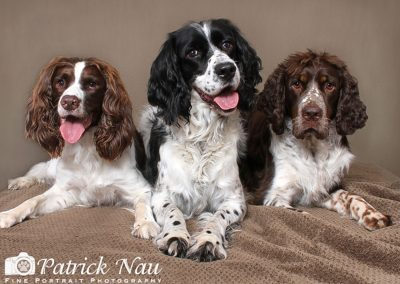 patrick-nau-minneapolis-pet-photography-014
