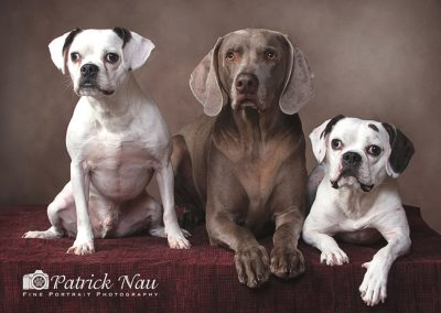 patrick-nau-minneapolis-pet-photography-021