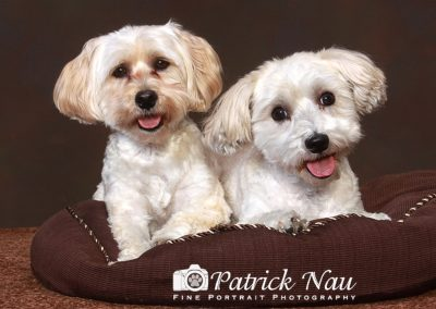 patrick-nau-minneapolis-pet-photography-024
