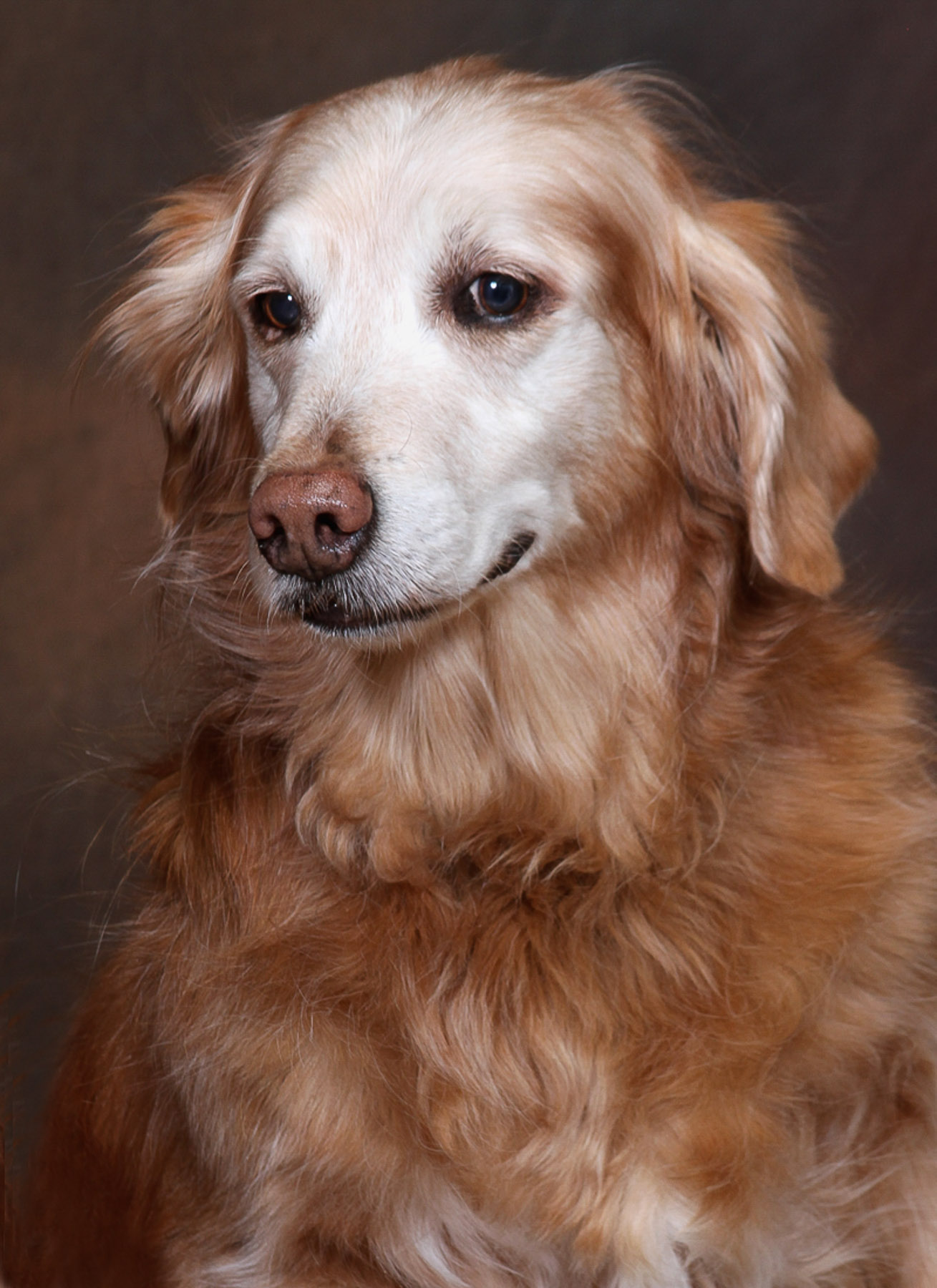 patrick-nau-minneapolis-pet-photography-025